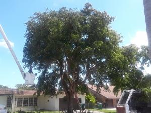 Tree Masters of Miami, FL