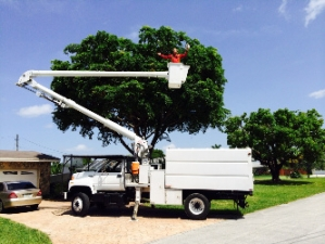 Tree Masters of Miami, FL